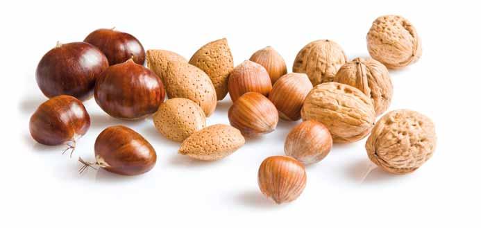 Producteur de marrons, châtaignes, noix, noisettes et amandes en Dordogne-Périgord