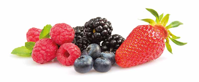 Production de fraises, framboises, mûres, myrtilles, groseilles en Dordogne-Périgord