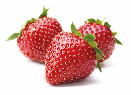 Producteur de fraises en Dordogne-Périgord