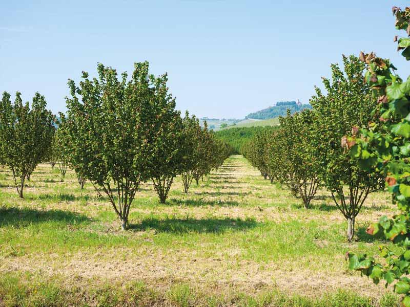 Producteur de noisettes en Dordogne-Périgord