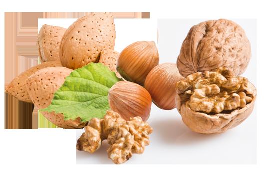 Production de noix, noisettes, amandes en Dordogne-Périgord